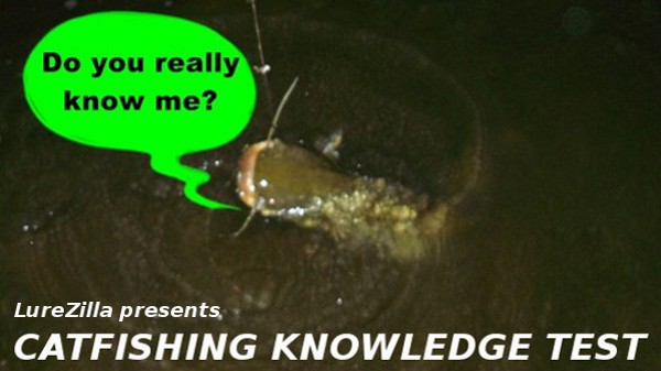 catfish knowledge test